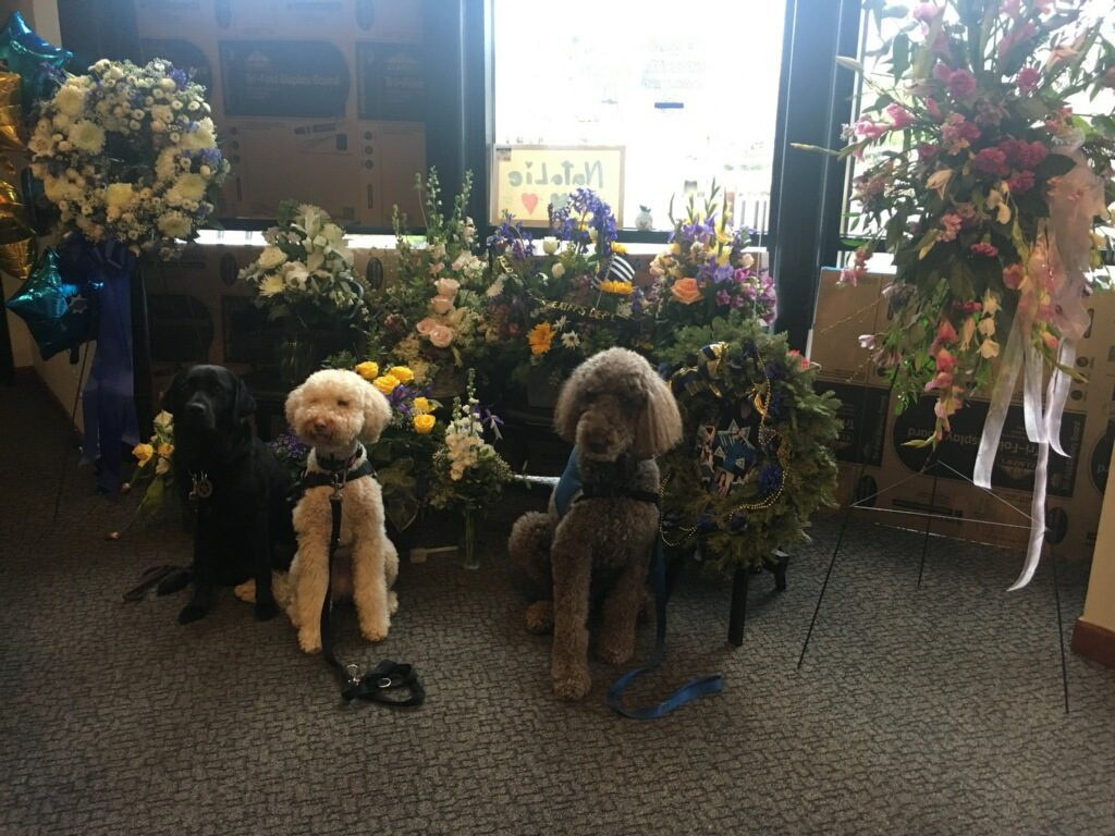 Image depicts comfort dogs on hand to offer assistance to those in distress
